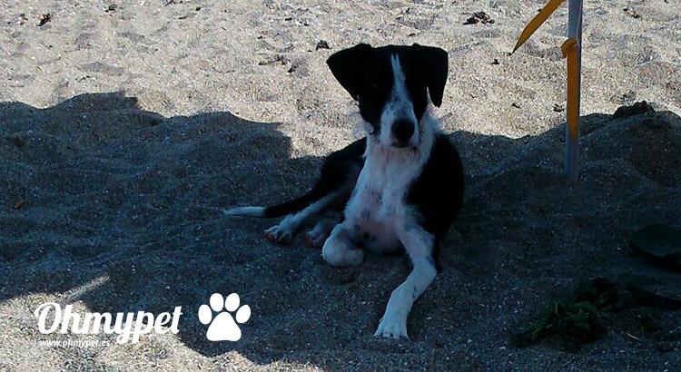 Un día de playa con tu mascota