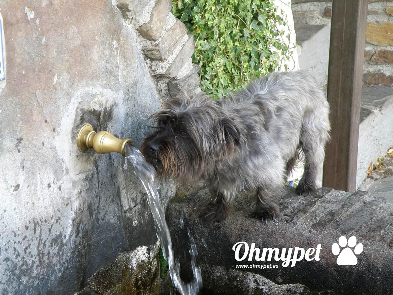Protege a tu mascota del calor