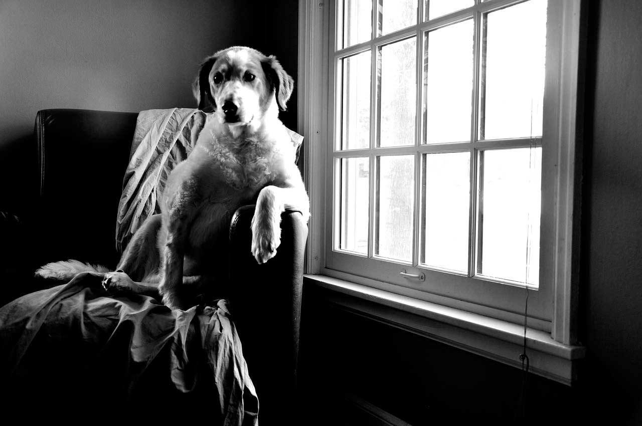 Nuestra mascota sola en casa