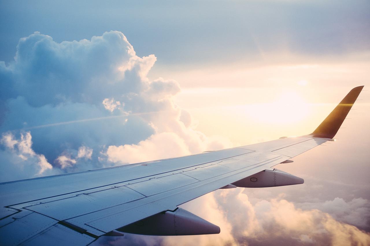 Volar con nuestra mascota