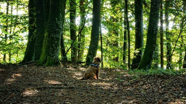 Cómo proteger a tu mascota del otoño